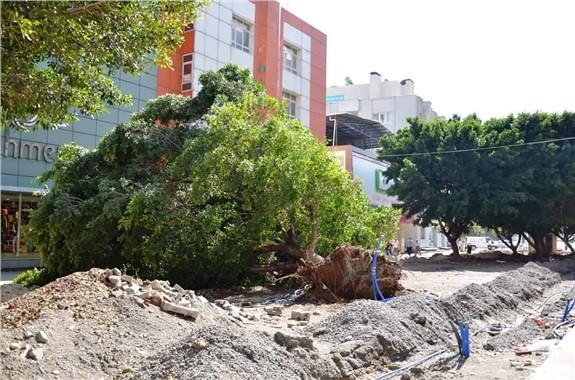 Tarsus Fırtına Ağaçaları Uçurdu