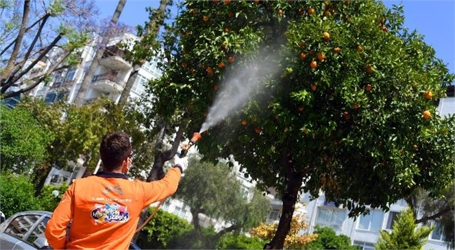 Mersin Büyükşehir Belediyesi, Akdeniz Bölgesi İçin Önemli Bir Sorun Oluşturan Akdeniz Meyve Sineği İle Mücadeleyi Etkin Bir Şekilde Sürdürüyor