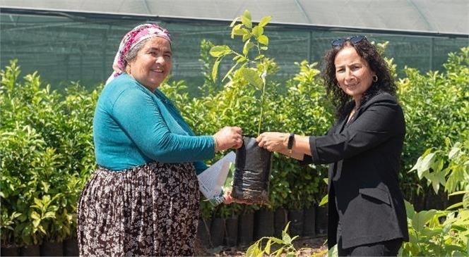 Mersin Büyükşehir'le Tarlalar 'yeşil Elmas' İle Değerlenecek