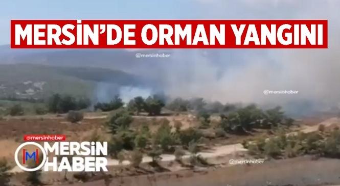 Mersin'in Silifke İlçesinde Orman Yangını Çıktı