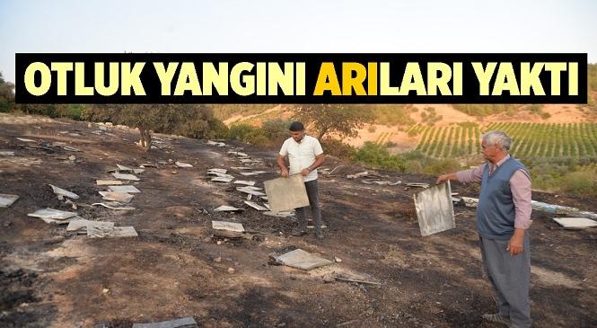 Mersin'de Yangının Ortasında Kalan Arılar Telef Oldu