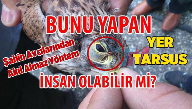 Tarsus'ta Yasadışı Şahin Avcılarından İnanılmaz Yöntem