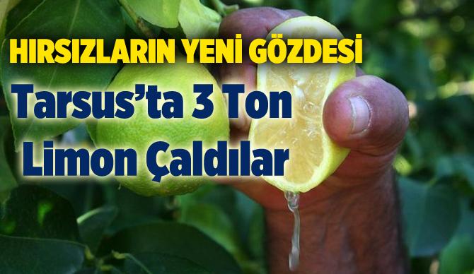 Tarsus'ta  3 Ton Limona Çalındı
