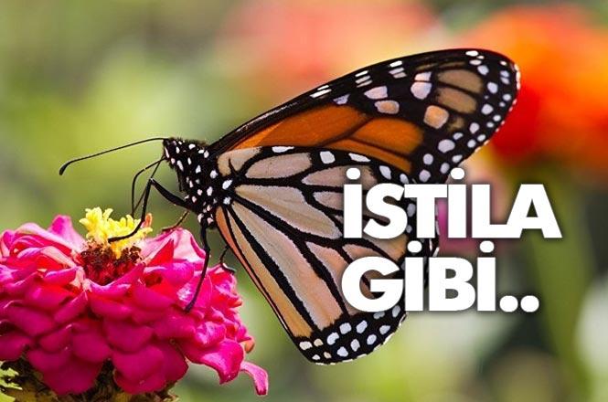 Mersin'de Kelebek İstilasının Nedeni Belli Oldu