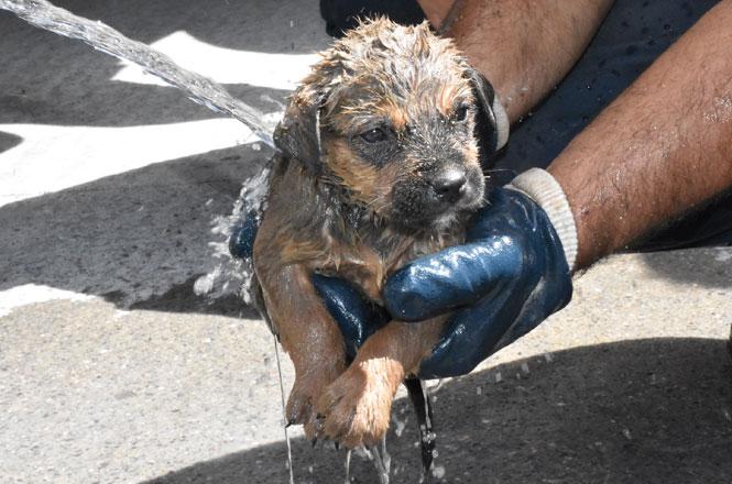 Mersin Tarsus'ta Su Gideri Borusuna Düşen Yavru Köpek Kurtarılırken, Başında Annesi Bekledi