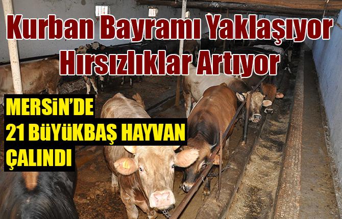 Tarsus'ta 21 Büyükbaş Hayvan Çalındı