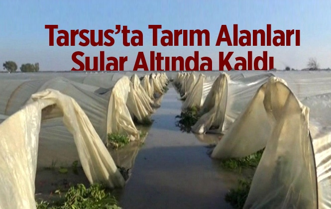 Mersin Tarsus'ta Tarım Alanları Sular Altında Kaldı