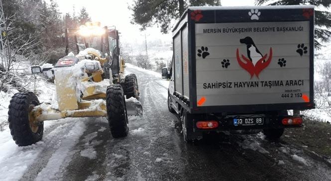 Mersin'de Yaralı Köpek, Veterinerlik ve Karla Mücadele Ekipleri Tarafından Kurtarıldı