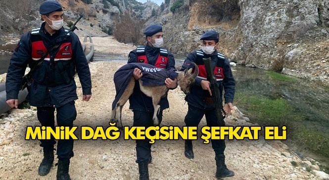 Arazide Rastlanan Yaralı Yavru Yaban Keçisi Jandarmanın Şefkat Kucağında Böyle Taşındı