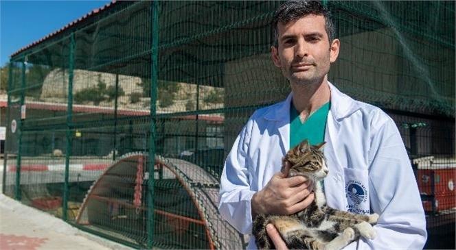 Kısırlaştırma İle Hayvanlarda Hastalıkların da Önüne Geçiliyor! Mersin Büyükşehir, Patili Dostlarda Kısırlaştırmanın Önemine Dikkat Çekti