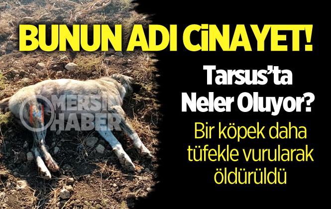 Tarsus'ta Bir Köpek Daha Silahla Vurularak Öldürüldü