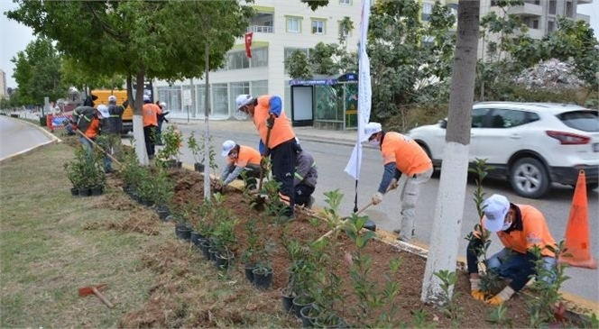 Mersin Büyükşehir Tarsus'ta Fidanları Toprakla Buluşturmaya Devam Ediyor