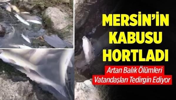 Mersin'in Tarsus İlçesinde Berdan Nehri'nin Denize Döküldüğü Noktada Çok Sayıda Ölü Balık Kıyıya Vurdu