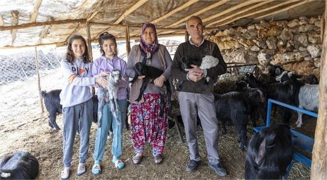 Doğan Kuzu ve Keçiler Üreticilerin Yüzünü Güldürüyor